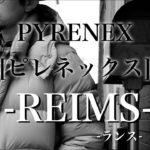 【フランス】PYRENEX[ピレネックス] REIMS(ランス) 【ダウンジャケット】