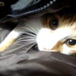 ダウンジャケットが好きな猫!お目々クリクリでどかないニャ~ン!A cat that likes down jacketsI! can't get it with my eyes